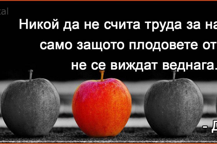 Никой не трябва да счита труда си за напразен …